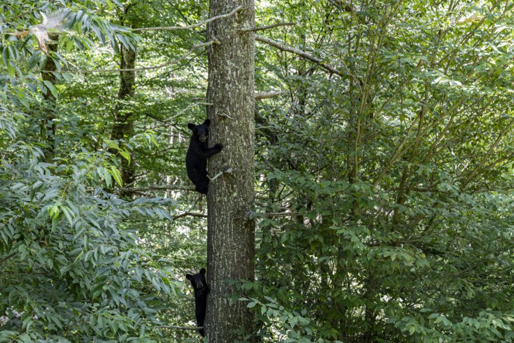 Eagles Nest Bear